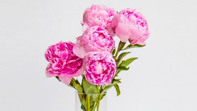 Поздравления с Днём рождения подруге. Букет цветов - Moonzori